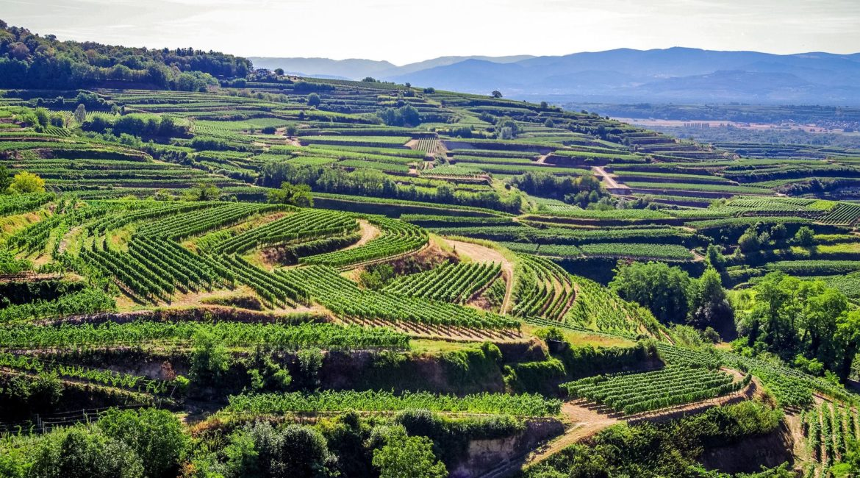 Galerie Land Wein