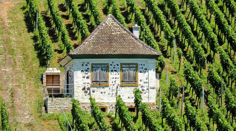 Galerie Land Wein 2