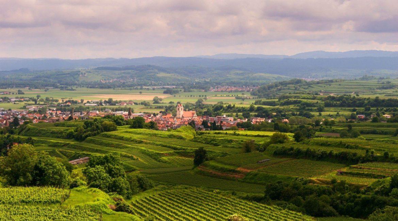 Galerie Land Wein 3
