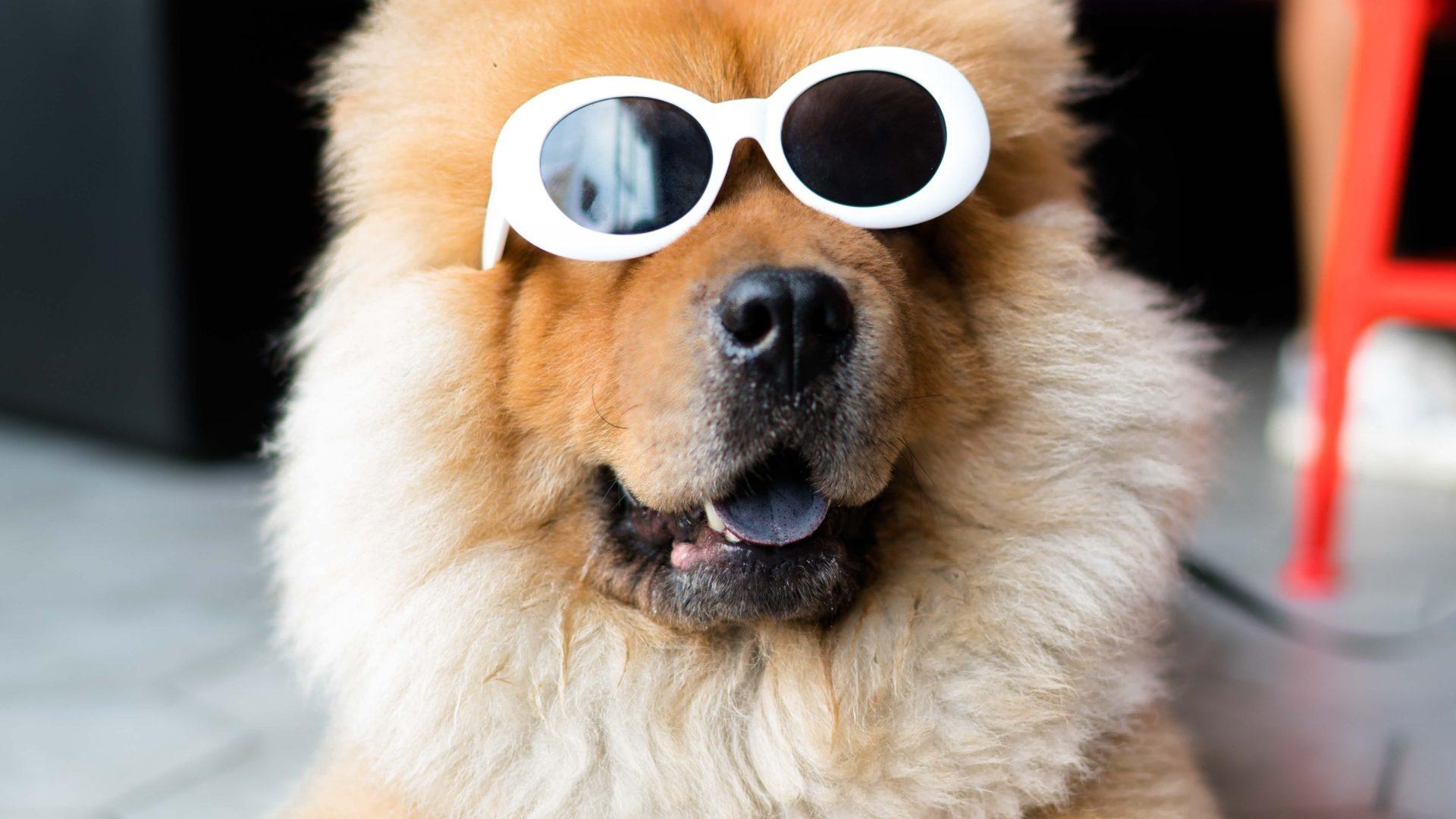 Klimawandel - Bevor wir auf den Hund kommen
